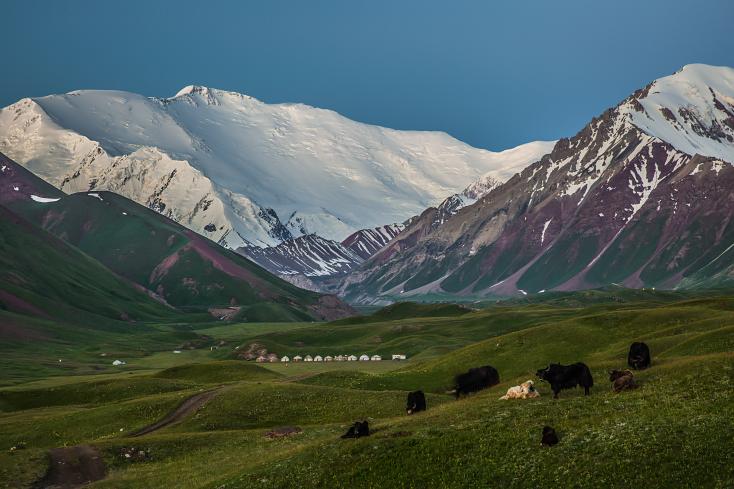 Kirgistan Pik Lenin und Yaks, Kyrgyzstan Peak Lenin and Yaks